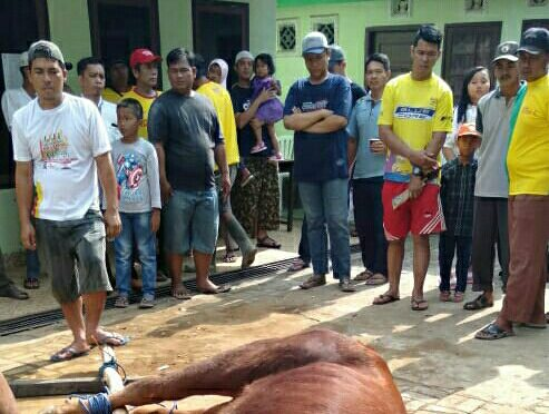 Saat proses penyembelihan sapi pelaksanan Korban di Masjid Arrahman Kel. Srijaya Kec. Alang Alang Lebar